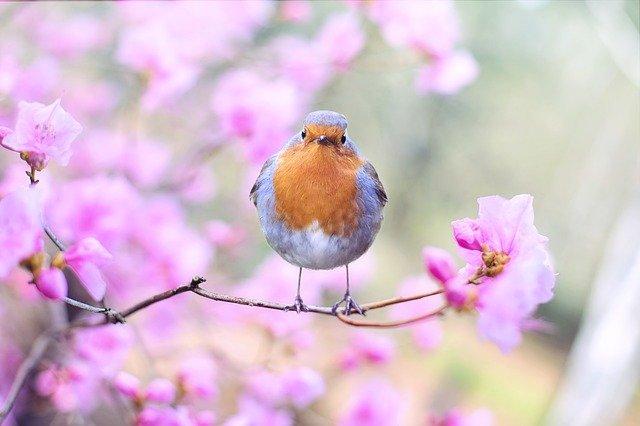 bird-2295436_640