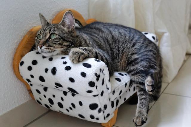 cat-2633840_640
